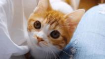 呆萌可爱的小橘猫,比女朋友还要粘人!