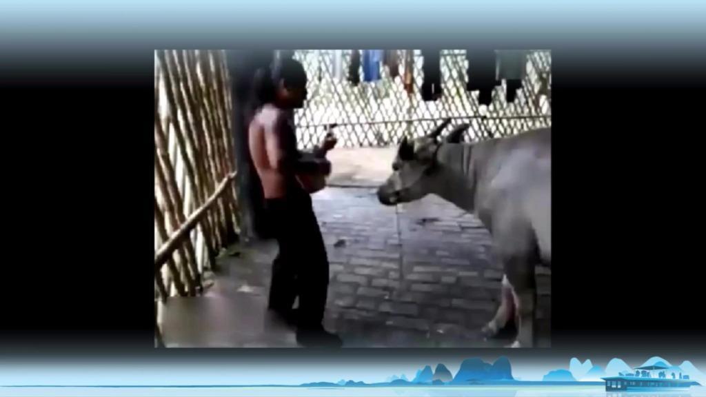 最牛的视频_最牛B视频 –