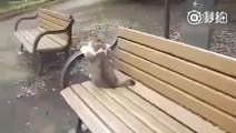 一隻有故事的貓......不知道他到底經歷了什麼?