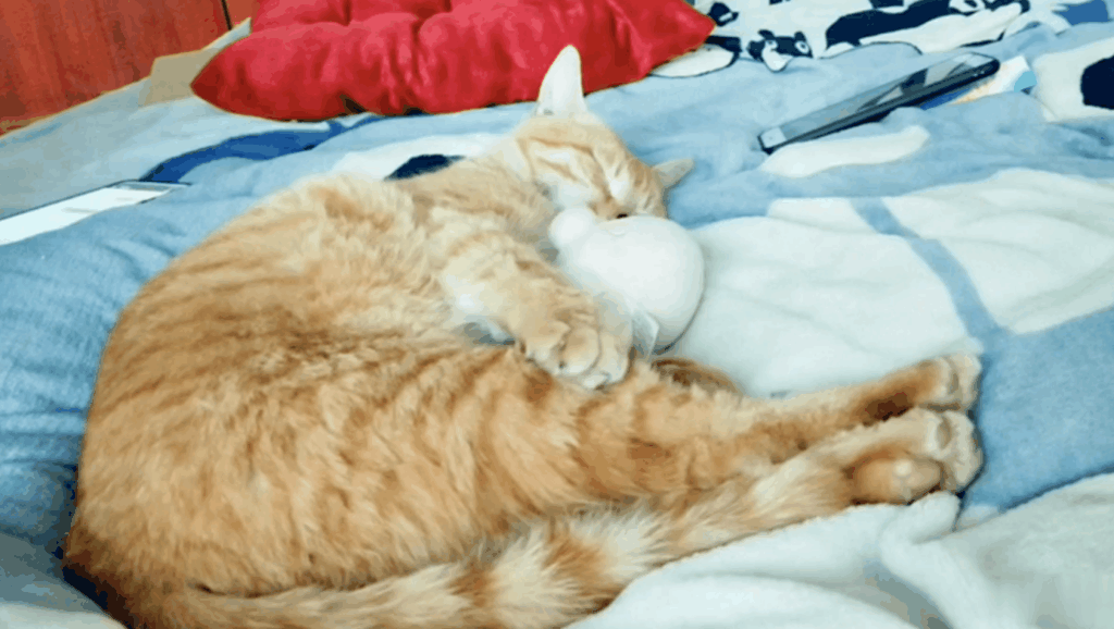 女主人强行叫醒熟睡中的橘猫,会发生什么?