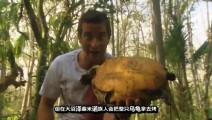 贝爷打野,捡到一只大乌龟,美滋滋烤柠檬乌龟吃!