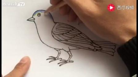 漂亮的飞鸟