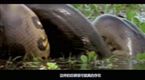 野生之最之亚马逊十大野生动物[高清版]