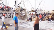 """远洋渔船回港卸货,一地的""""僵尸""""金枪鱼"""
