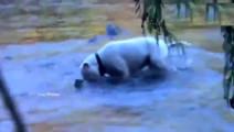 狗狗被主人收养后每天都到河边给主人抓鱼吃,自己都不舍舔一口!