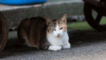 三个月前喂养的流浪猫,今天见到还记得我