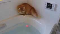 都说猫咪怕水,我现在才相信~