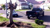 老外驾驶皮卡汽车,把家门口的树连根拔起