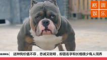这种狗价值不菲,忠诚又聪明,却因名字和长相很少有人饲养