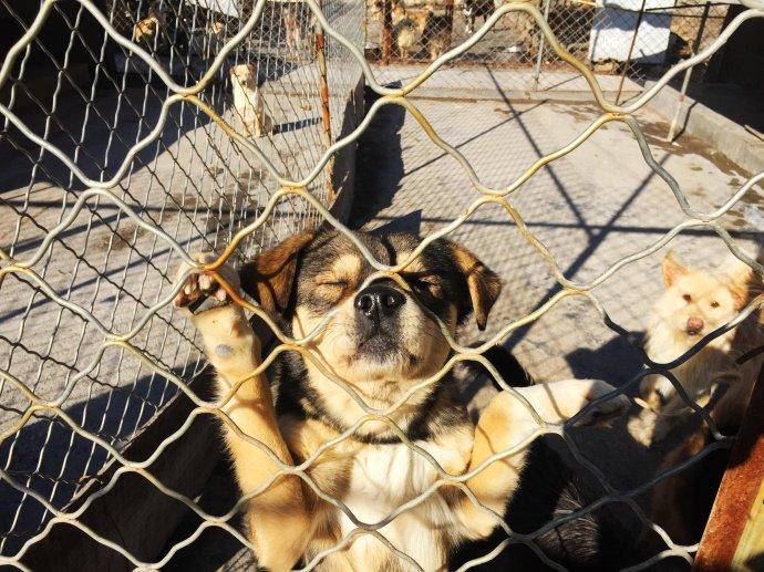 遇见, 小动物保护中心的流浪狗