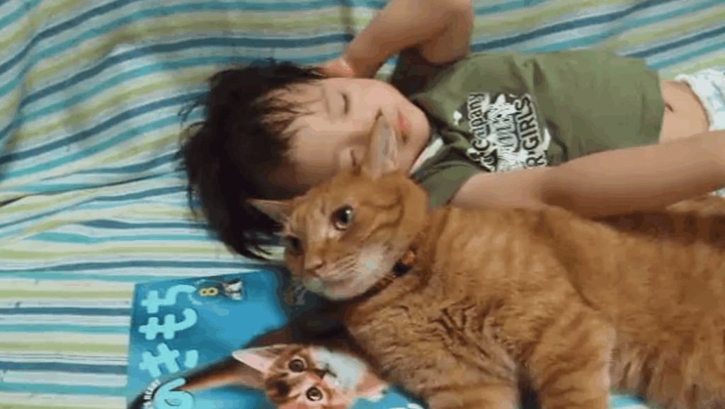 和小朋友一样大的胖橘,这应该是只真的橘猫吧?