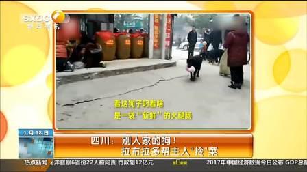 """四川: 别人家的狗!拉布拉多帮主人""""拎""""菜"""