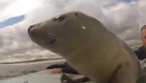 冲浪冲到一半,竟然多了一个意外访客?这只小海豹也太可爱了