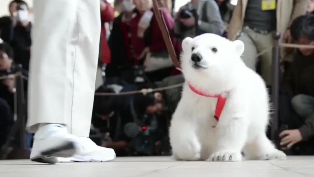 打开 打开 小北极熊也敲可爱,呆萌呆萌的 打开 熊出没 呆萌可爱的熊二
