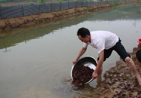 小龙虾怎么养殖的, 带你回养殖基地转转