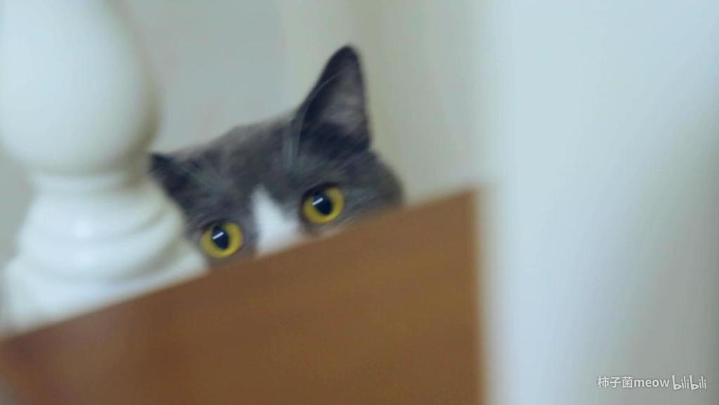 过年回来,三只小猫咪把家祸祸惨了!臭死了,房子我不要了!