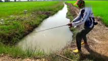 钓鱼: 夹在稻田中间的水沟,试抛几竿,还真有鱼!