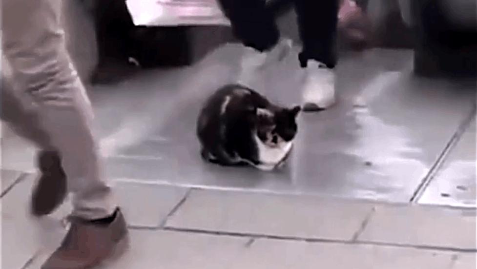 内心最强大的动物,非猫咪莫属,这是在找机会碰瓷吗
