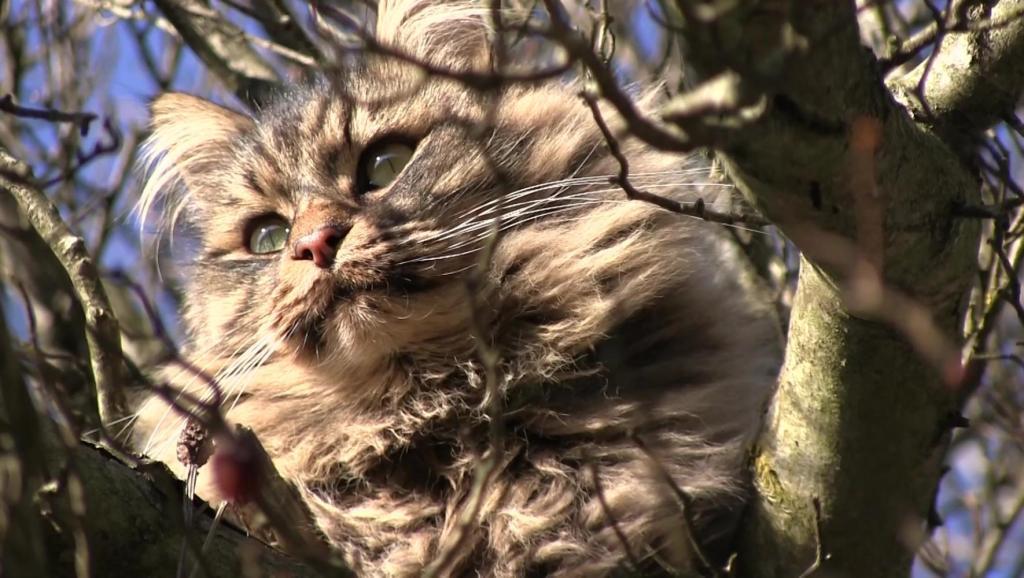 在树上的虎斑猫,这一脸委屈的,谁也没逼你上树啊,下不来了怪得了谁
