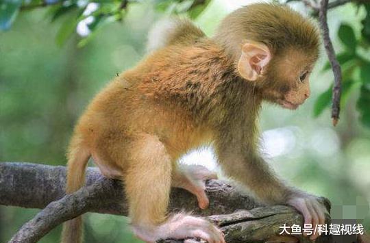 美妆达人给猴子化妆, 差点以为是个美女, 化妆太魔性了
