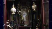 每日一囧,这猫是成仙了?每次上香都跑上去,这是要干什么
