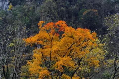葛仙山风景区位于彭州市葛仙山镇,是龙门山脉的一段,海拔1300米左右