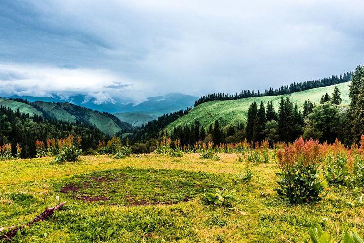 世界四大草原之一, 私藏在中国新疆, 被称为空中草原!