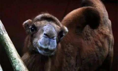 翠屏山动物园, 动物们真可怜! 家长呐喊: 宜宾需要一个新动物园啦!