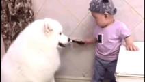 这只萨摩耶与小男孩已经成为一对网红,真是对萌宝,太可爱了