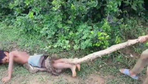 柬埔寨小姐弟弟以身作饵 诱捕蟒蛇贩售养家