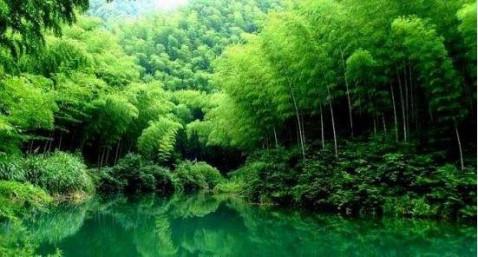 古风风景美图竹林