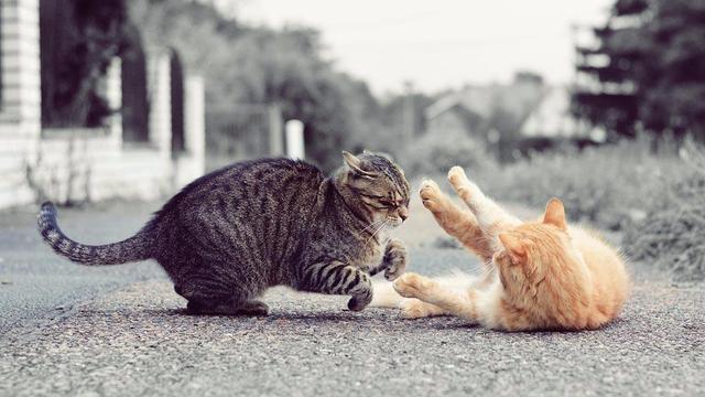 小猫小狗打架