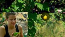 贝爷的求生使命: 明星们品尝贝爷留下的丛林军需粮样品,葫芦树果!