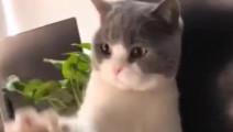 主人: 你吃我,穿我,喝我的,摸一下都不行?猫: 你再过来老子一巴掌呼死你!