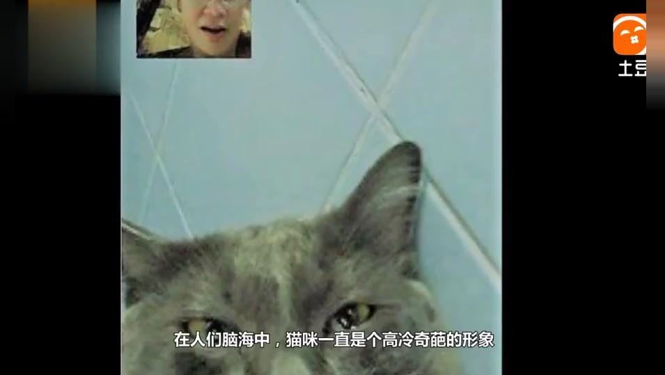 女子出差和猫咪视频聊天,猫咪太想念主人,不停掉眼泪,长见识了