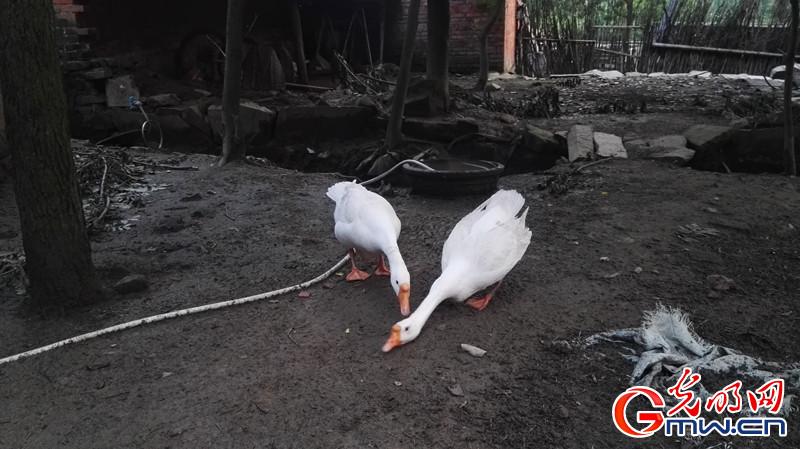 """河南新县: """"羊司令""""办起了动物园"""