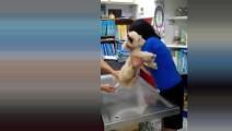 女主人带泰迪量体温,温度计一插进去,狗狗的反应让人笑翻了!