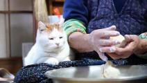 老奶奶正在做包子,猫咪一脸幸福地趴在旁边