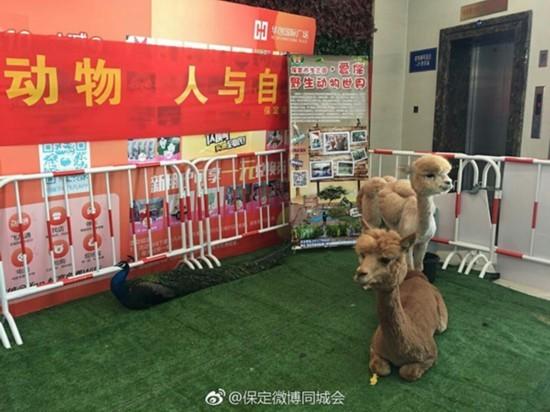 """保定商场现""""瑟瑟发抖""""野生动物: 当地一动物园宣传动保"""