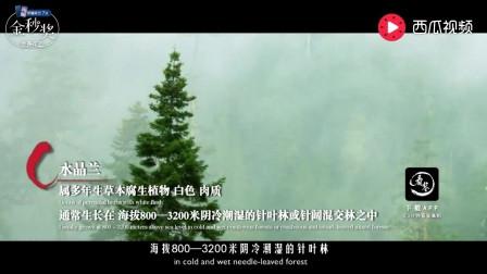 小说中能延长寿命的冥界花真的有?专家四川发现神秘植物揭开谜底