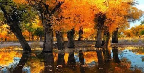 夏天的胡杨林也很有观赏性, 色彩更加丰富, 生命力体现的更加完美