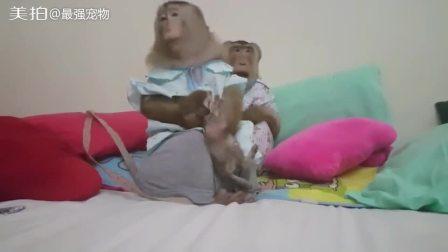 猴子把小猫当成自己孩子,猫咪: 我们不一样 #喵星人