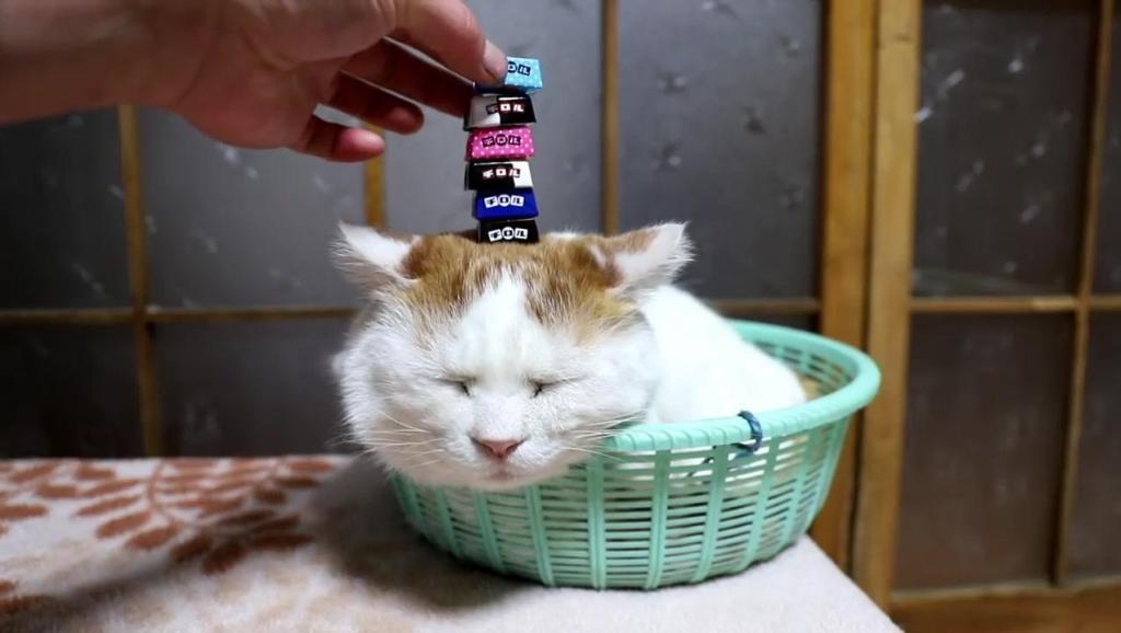 小懒猫,包子脸,太可爱了!