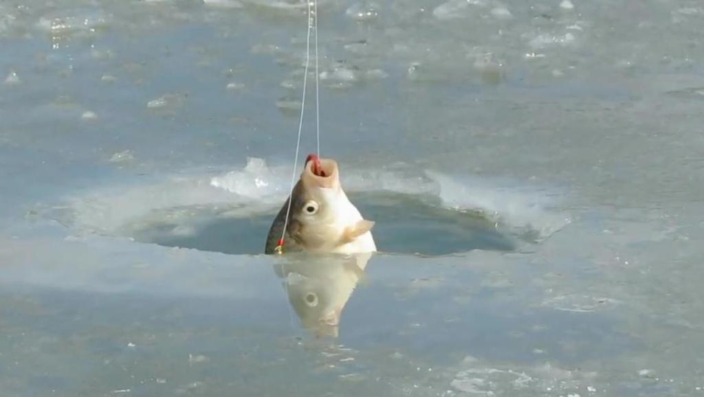 单钩野钓的调漂方法