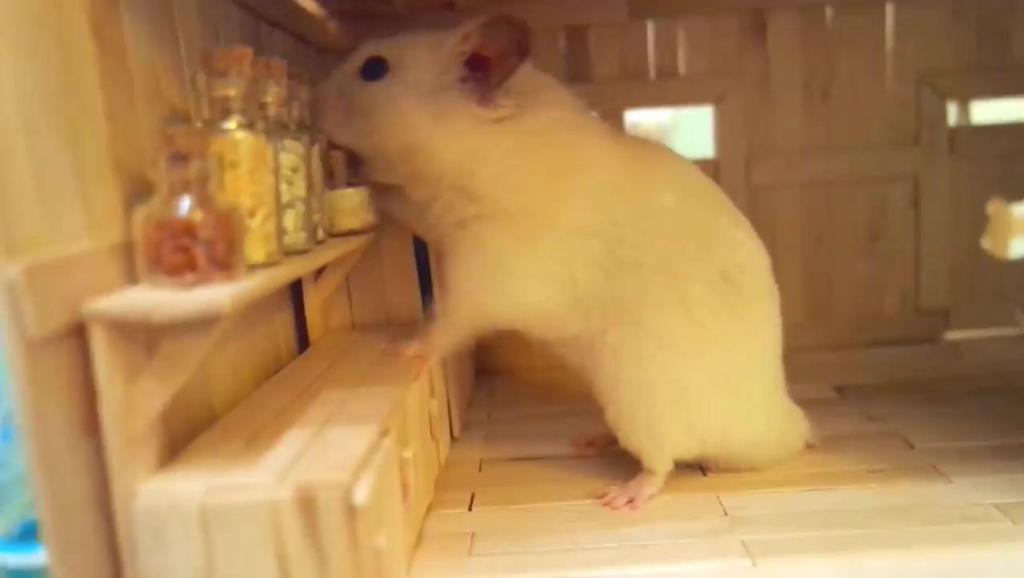 萌萌仓鼠和它温馨精致的小屋
