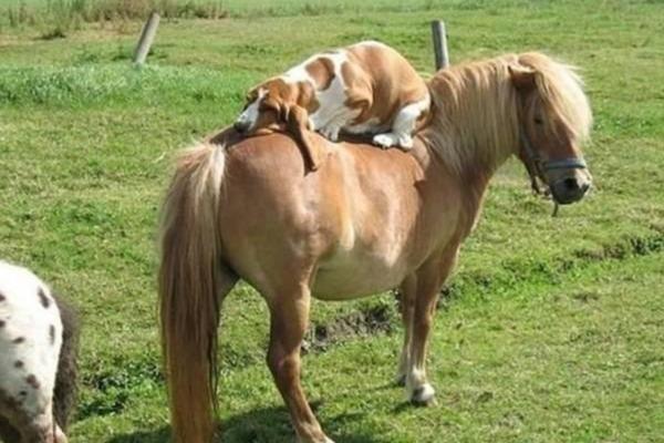 跨越种族的动物们!狮子和老虎,狗和马看到你们在一起,突然我又相信爱情了!