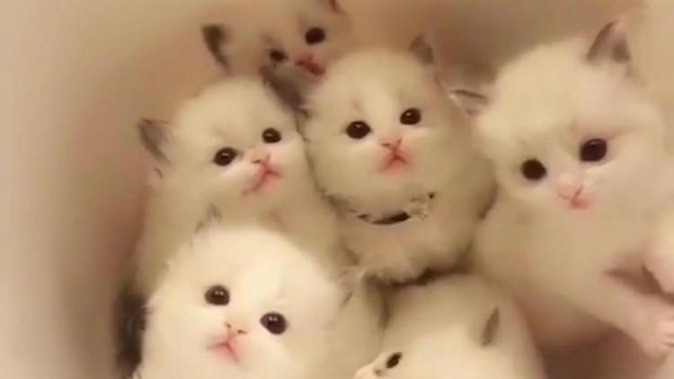 超级可爱的小猫!