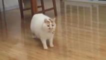 不过一只肥猫在走路,我却看了不下十次