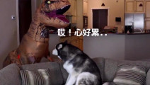 网友又一次扮恐龙吓哈士奇,Steel: 三十岁的人还像个孩子一样