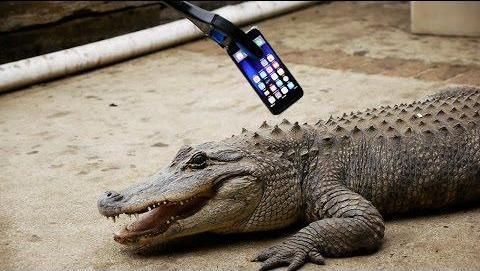 如果鳄鱼咬了iPhone 7会怎么样?